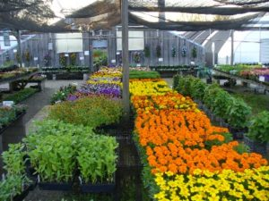 Bella Terra Greenhouse 716 549 2014 8607 North Main Street
